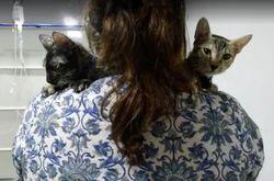 Pets Treatment