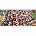 Narmadeshwar / Several Size Narmada Stone Shivling