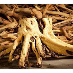 Natural Sandalwood Tree Roots