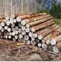 Industrial Eucalyptus Pole
