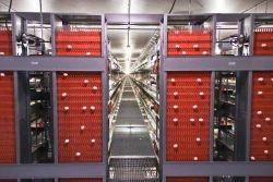农场鸡蛋收集系统的处理和运输
