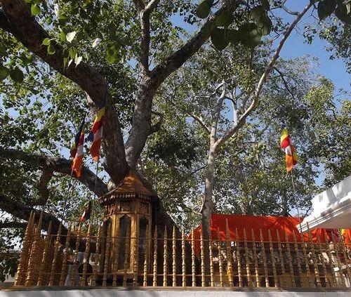 Mahabodhi Tree Tours