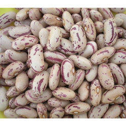 Indian White Kidney Bean, Speciality:High In Protein