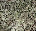 Mints Leaf