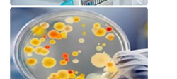 Microbiological Studies Service
