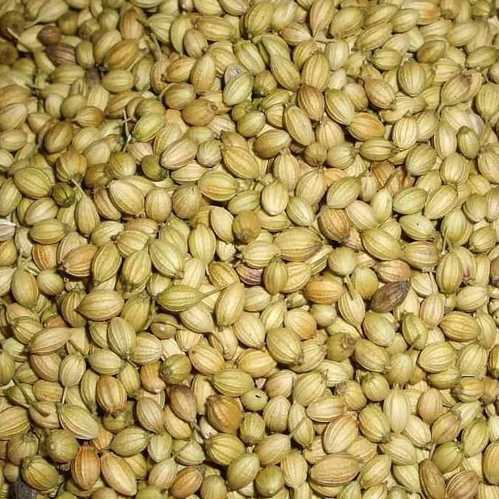 4 Easy Facts About When Are Coriander Seeds Ready To Harvest Shown