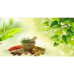 Ayurvedic & Herbal PCD Pharma In Vidisha