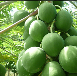 Fruit Plants In Hyderabad Suppliers Amp Prices In