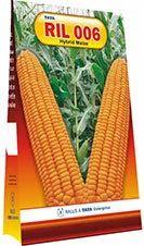 Hybrid Maize Ril 006