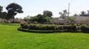 Hedge Plant