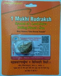 1 Mukhi (One Face) Rudraksha Certified Beads, Weight: 50 Grams