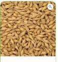 Barley Organic Cereals