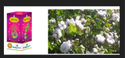 Cotton Seeds Kdchh 202