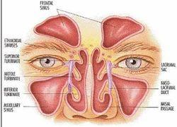 Endoscopic Sinus Surgery Services