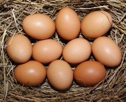 Brown Chicken Poultry Farm Eggs