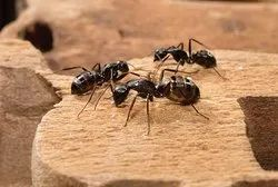 Commercial Ants Control Services, Ncr