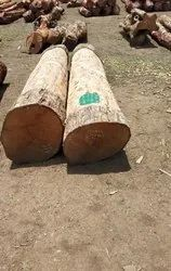 Haldu Wood Round Logs