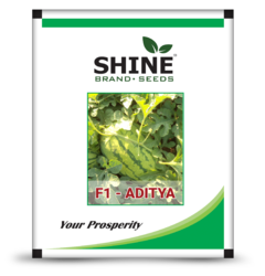 Shine Brand Seeds Hybrid Water Melon Seeds - F1 Aditya, Pack Size: 1kg