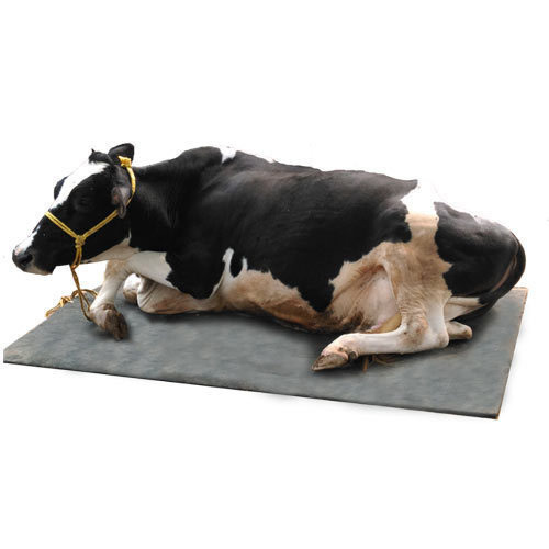 Rubber Cow Mat And Pasture Mat, Rubber Cow Mat, Dairy Mattress, गाय के नीचे  बिछाने वाली चटाई, काऊ मैट in Medical Square, Nagpur , Cattle Comfort | ID:  15605981955