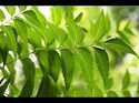 Organic Neem Leaf Powder