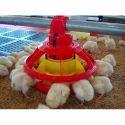Chicken Poultry Feeder