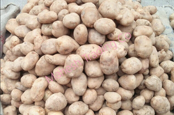 P3 Local Potatoes