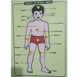 Body Parts Knob & Peg Puzzle