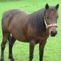 Pony Horse Feed