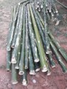 Treated Bamboo Logs Suppliers in india