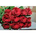 Indian Red Rose