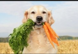 Dog Dental Care Services