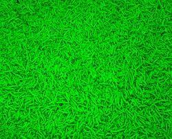 Green Detergent Speckle