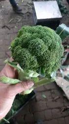 Green Fresh Broccoli, Packaging Type: Carton, Packaging Size: 5 Kg