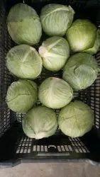 Green Fresh Cabbage, Carton, 5 Kg