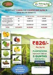 ORGANIC FARM PLOTS RAGHUNATHPALLI