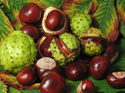 P.E. Horse Chestnut Extract