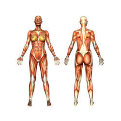 St Johns Imported Anatomical Charts