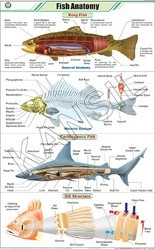 Fish Anatomy For Zoology Chart