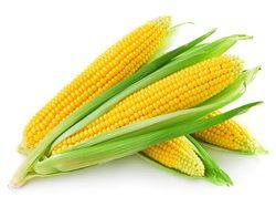 Potassium Polyacrylate for Maize