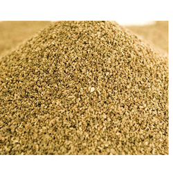 25 kg Celery Powder, Packaging: Packet