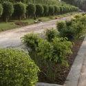 Horticulture Gardening Designing