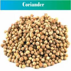 Natural Coriander Seed, Packaging Type: PP Bag and Gunny Bag, Packaging Size: 40 Kg