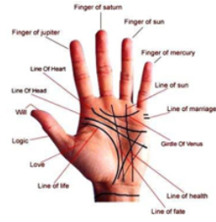 Palm Reading In Koregaon Park Ragvilas Society Pune Id 14505783248