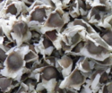 Black Slightly Brown Hulled Moringa Seeds For Cultivation