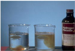 Hydrogen Peroxide (H2O2) 50%, CAS No- 7722-84-1, 50 kg HDPE Carboys