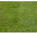 Artificial Carpet Grass