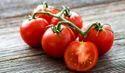 Lycopene Tomato Extract