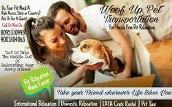 Pet Transportation Services Bangalore