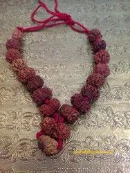 1 To 14 Mukhi Collector Size Rudraksha Siddh Mala With Gauri Shankra And Ganesha