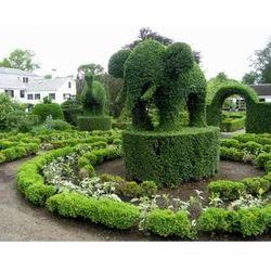 Elephant Topiary Plants